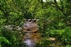 Bilder Vereinigtes Königreich Park Flusse Sommer Ast Exmoor National Park Natur