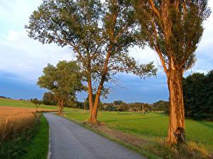Photo Czech Republic Roads Summer Fields Trees  Nature