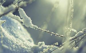 Fotos Winter Schnee Ast Natur
