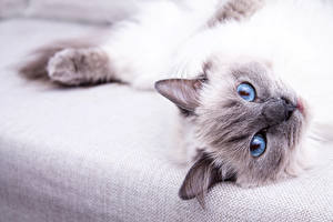 Images Cats Eyes Staring animal