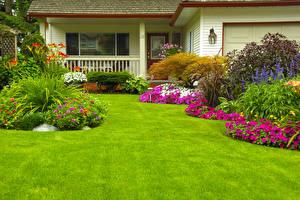 Wallpaper Houses Gardens Petunia Zinnia Lawn Bush Nature Cities