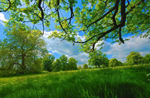 Hintergrundbilder Sommer Gras Bäume Ast Grün Natur