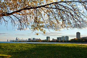 Fotos Vereinigte Staaten Ast Chicago Stadt Michigan Gras Illinois Städte