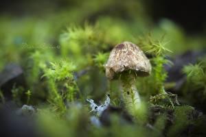 Bilder Pilze Natur Laubmoose