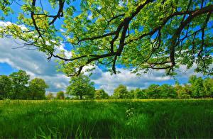 Fotos Ast Gras Grün Natur