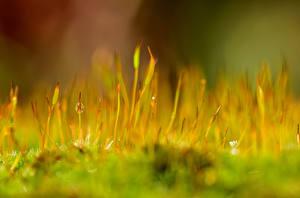 Photo Closeup Moss Drops Nature