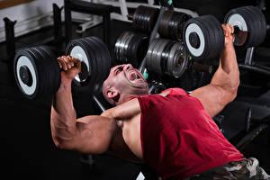 Fotos Mann Bodybuilding Hantel Muskeln Körperliche Aktivität sportliches