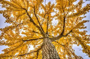 Hintergrundbilder Herbst Bäume Ast Baumstamm Untersicht Ansicht von unten Natur
