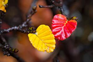 Bilder Herbst Großansicht Ast Blatt Natur