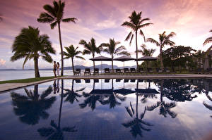 Wallpaper Sea Palm trees Pools Sunlounger Nature