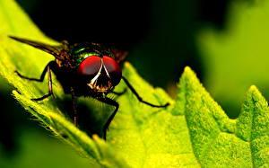 Papel de Parede Desktop moscas Insetos De perto Folha Animalia