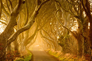 Fotos Straße Nebel Bäume Ast Natur