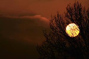 Fotos Sonnenaufgänge und Sonnenuntergänge Silhouette Sonne Ast Natur
