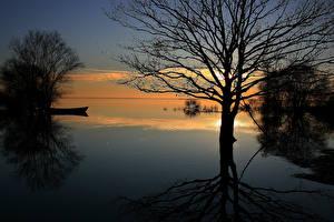 Bilder Sonnenaufgänge und Sonnenuntergänge See Bäume Ast Natur