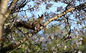 Hintergrundbilder Eichhörnchen Frühling Ast Tiere