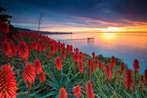 Bilder USA Sonnenaufgänge und Sonnenuntergänge San Diego Agave Natur Blumen
