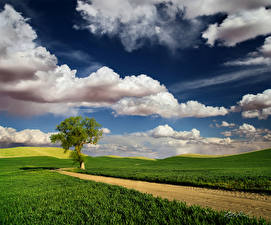 Picture Spring Roads Fields Trees Clouds Grass Nature