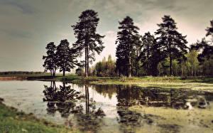 Hintergrundbilder Sumpf Bäume