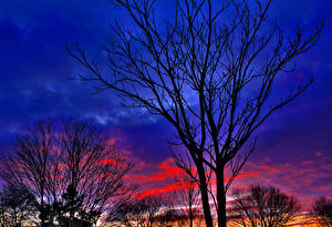 Fotos Bäume Silhouette Ast Natur