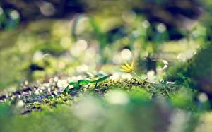 Wallpapers Closeup Grass Moss Nature