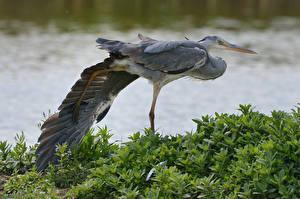 Fotos Reiher Vogel Tiere