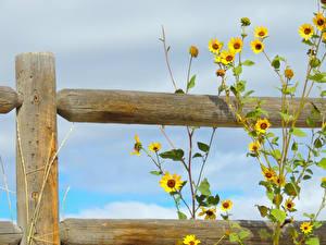 Bakgrunnsbilder Nærbilde Gjerder blomst