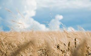 Bilder Acker Ähre Wolke