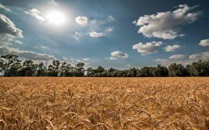 Fotos Sommer Acker Himmel Weizen Ähre Wolke