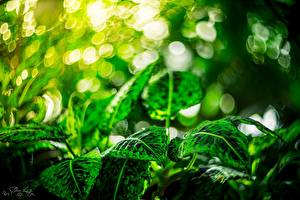 Picture Foliage Green Nature