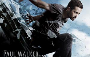 Bakgrundsbilder på skrivbordet Paul Walker En man Brick Mansions Damien Filmer Djur