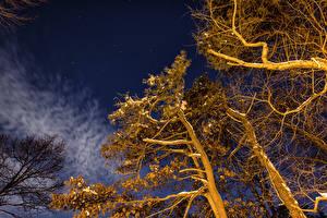 Hintergrundbilder Winter Nacht Bäume Ast Natur