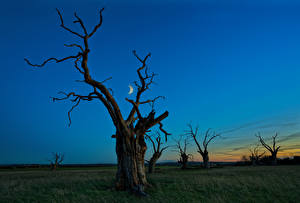 Bilder Himmel Bäume Nacht Mond Ast Natur