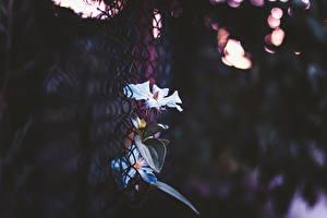 Bakgrunnsbilder Nærbilde Gjerde blomst