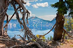 Bilder USA See Gebirge Landschaftsfotografie Ast Oregon Natur
