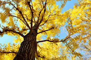 Bilder Herbst Bäume Baumstamm Ast Untersicht Ansicht von unten Natur