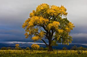 Image Autumn Storm cloud Trees Nature