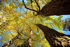 Fotos Herbst Rinde Bäume Baumstamm Untersicht Ansicht von unten Natur