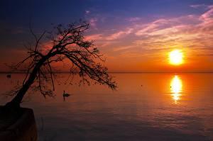 Fotos Sonnenaufgänge und Sonnenuntergänge See Bäume Silhouette Sonne Horizont Natur