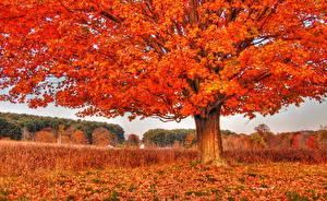 Pictures Autumn Trees Leaf Orange Nature