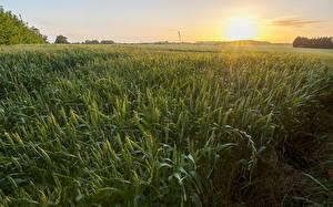 Fotos Felder Weizen Ähre