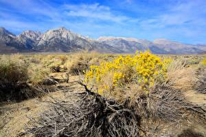 Fotos Gebirge Landschaftsfotografie Ast Natur