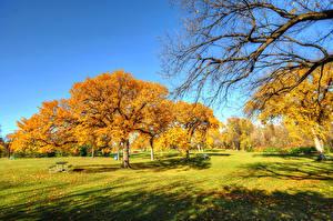 Bilder Park Herbst Gras Bäume Ast Natur