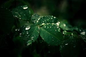 Wallpapers Closeup Leaf Green Drops Nature