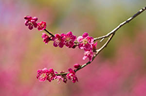 Hintergrundbilder Frühling Blühende Bäume Großansicht Ast Natur
