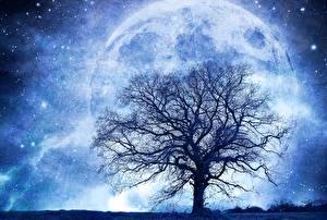 Hintergrundbilder Planeten Stern Bäume Silhouette Ast Fantasy Kosmos