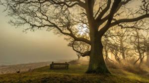 Bilder Nebel Bäume Strand Bank (Möbel) Baumstamm Ast Natur