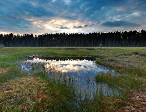 Fotos Wälder Gras Sumpf