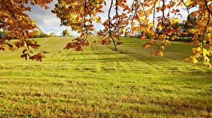 Fotos Jahreszeiten Herbst Ast Gras Natur