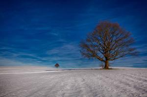 Fotos Winter Himmel Bäume Schnee Ast Natur