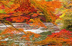 Bilder Herbst Wälder Flusse Ast Natur
